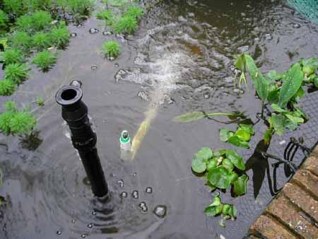 Becketts foaming venturi nozzle fountain for fish ponds for Koi pond venturi